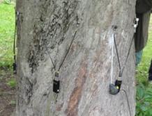 sondy ve stromě (foto: Jana Laciná)