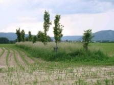 krajinný prvek vnitřní (foto: Vlastimil Kostkan)